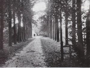 Ringlaan, oprijlaan met bomen Huize Bergzicht Eerbeek